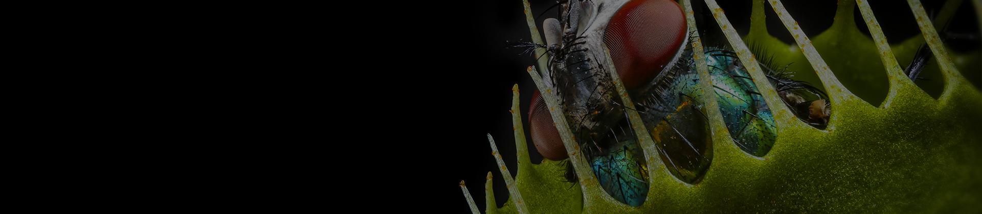 Mücken